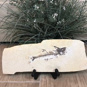 Genuine Sandstone Fish Fossil on Stand